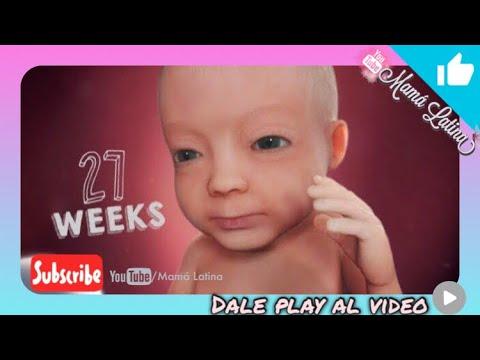 semana-27-de-embarazo-|-27-weeks-pregnant-|-6-meses-de-embarazo-|-desarrollo-de-tu-bebe