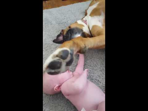 Baby and boxer funny hilarious ending!