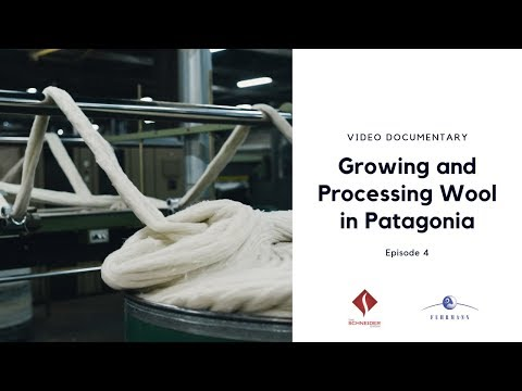 Growing and Processing Organic and RWS Certified Wool in Patagonia - Episode 4