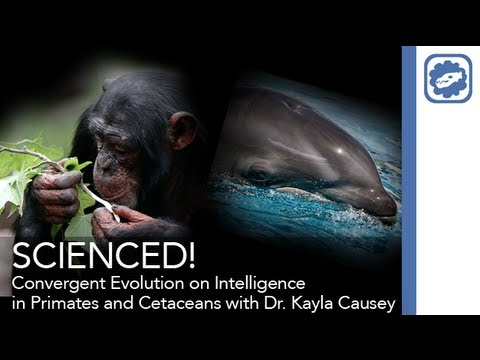 "SCIENCED! - ""Convergent Evolution on Intelligence in Primates and Cetaceans"" with Dr. Kayla Causey"