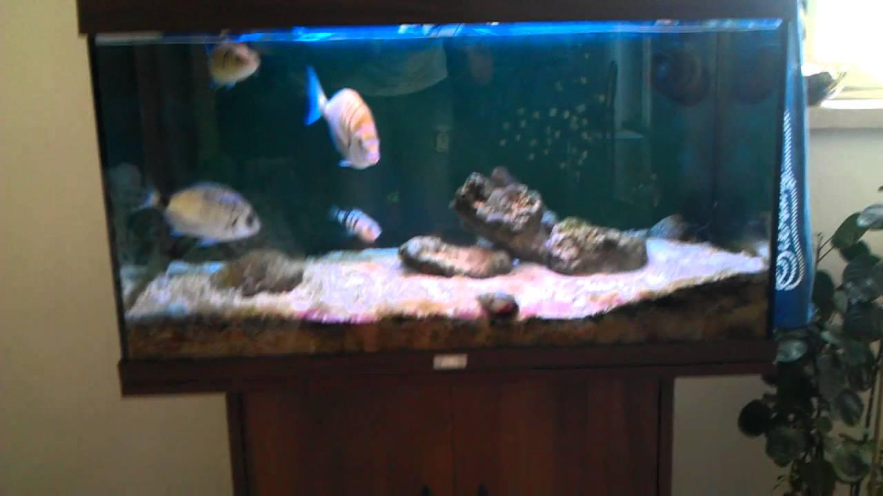 Acquario marino mediterraneo med youtube for Filtro acquario fai da te