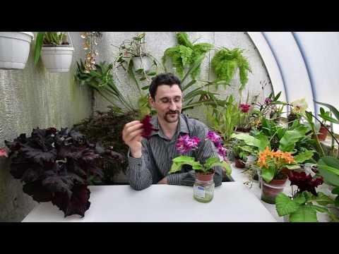 Причины сбрасывания растениями бутонов. Опадание цветков.