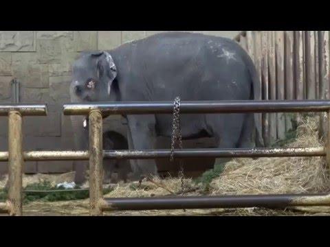 Edgar, das kleine Rüsselchen aus dem Tierpark Berlin   17 01 2016