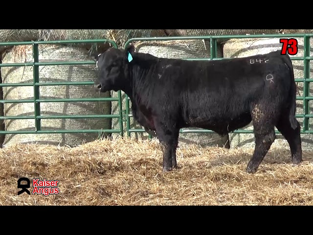 Kaiser Angus Ranch Lot 73