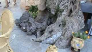 Оливковое дерево.(Видео для блога: http://sergiisolodkyi.blogspot.com/2013/01/valldemosa.html Большое и старое оливковое дерево в Вальдемосе., 2013-01-13T15:59:50.000Z)
