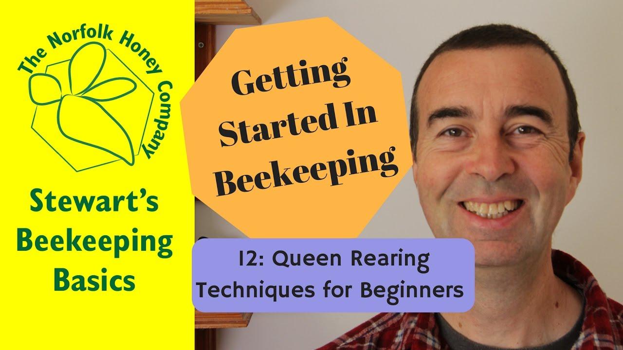 getting started in beekeeping 12 queen rearing for beginners