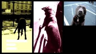 TERRANOVA  'Uchu No Inu' feat Rocco ( official video)