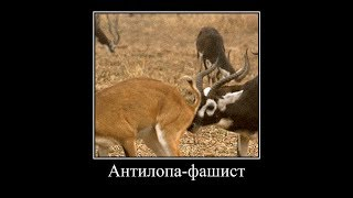 """Антилопа-фашист пародия на """"В мире животных"""" и Н Дроздова (смешная озвучка)"""