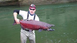 49 lb King Salmon