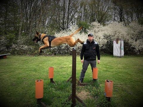 Sebastian Schäfer - Polizei & Diensthunde Technikarbeit
