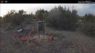 Texas Wildlife Cams: Channel Trailer