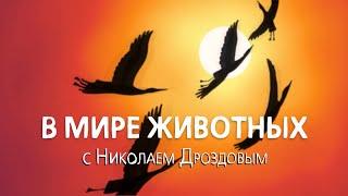 В мире животных с Николаем Дроздовым  Выпуск 36 (2018)