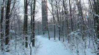 téli pillanatok a Gödöllői-dombságban