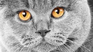 Как продать дорого - кот экстросенс за 5 миллионов руб