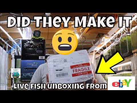 Live Fish Unboxing From Ebay  Aqurium Fish Room VLOG