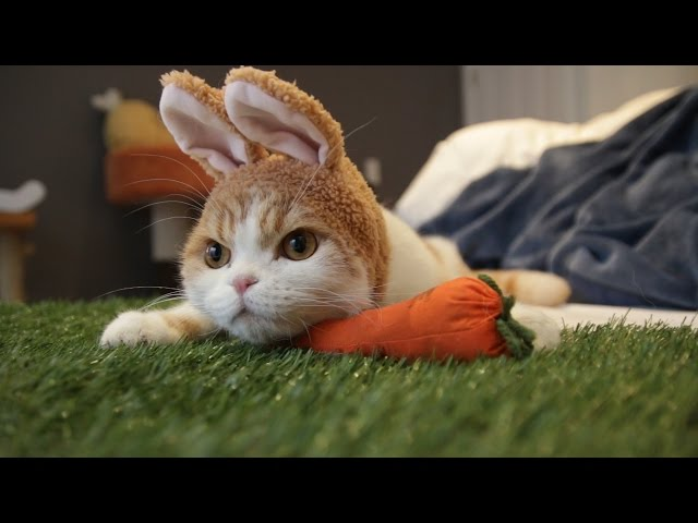 Cute Easter Rabbit with Waffles the Cat