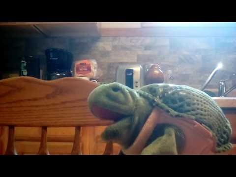 Tippy Turtle Talks The Alamo