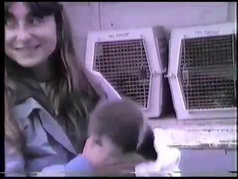 rescued-sea-otter-from-the-exxon-oil-spill