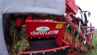 Marchewkowe żniwa - DEWULF P3K Farmer