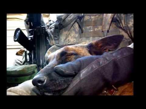 War Dog Memorial and Tribute