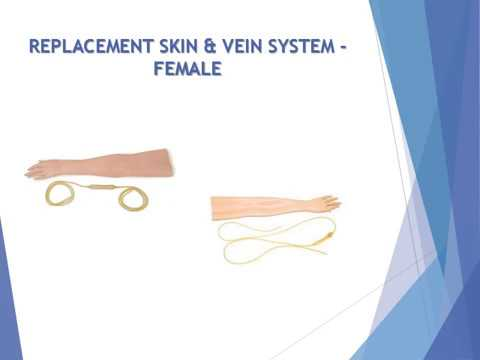 REPLACEMENT SKIN & VEIN SYSTEM – FEMALE