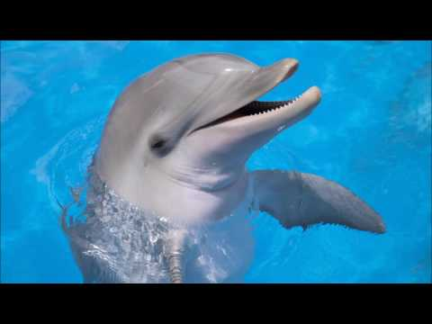 Dolphin Ringtone | Ringtones for Android | Animal Ringtones