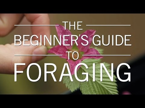 The Beginner's Guide to Foraging | Original Fare | PBS Food