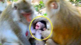 why big monkey bites baby monkey
