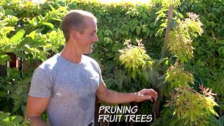 How to PRUNE Fruit Trees in your Garden