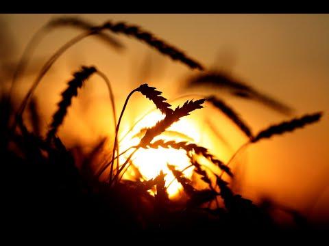 من البلد الأكثر استهلاكاً للقمح، الصينيون يبتكرون حلولاً تضاعف إنتاج القمح  - نشر قبل 22 ساعة