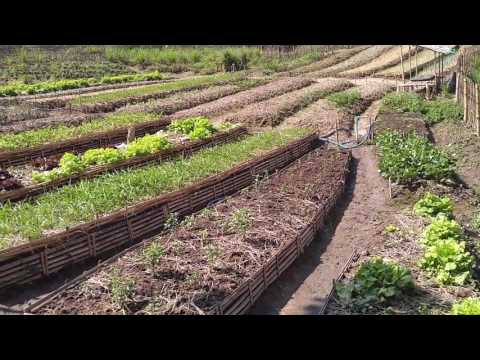 Permaculture garden beds in Thailand