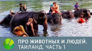 Таиланд. Часть 1 - Про животных и людей | Живая Планета