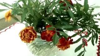 видео Ботва моркови: полезные свойства и противопоказания