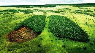 Катастрофа! Спасите джунгли Амазонки | БРАЗИЛИЯ(Мы расскажем про большую проблему, которая коснулась джунглей Амазонки в Бразилии. Из первых уст узнаем..., 2017-01-02T07:48:14.000Z)
