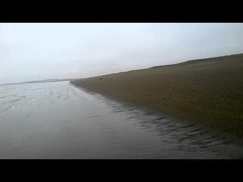 Monstruo en la costa del mar argentina