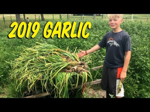 2019 Garlic Haul
