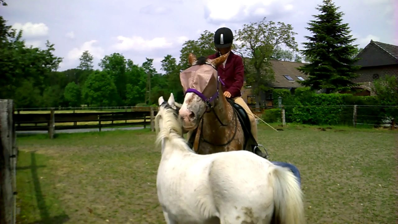 Mounting your horse with back problems