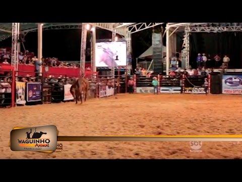 Waguinho Animal - Montarias em Rodeio de Ouro Verde 22/04/17