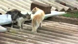 Kedilerin Kavgası (Kesin İzle).