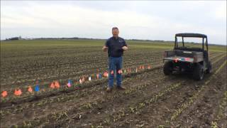 Walking the Fields With Doug 6-2-2015