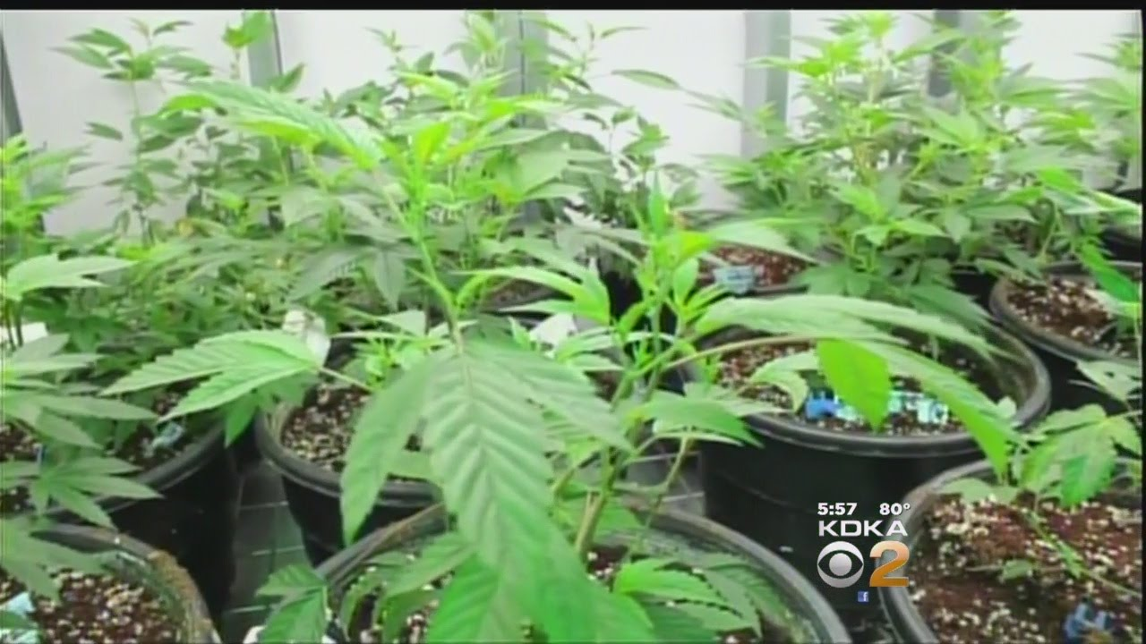 Some of Pennsylvania's hopeful pot growers, dispensers identified