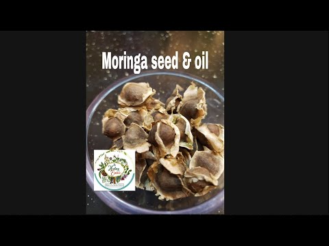 How to eat Moringa seeds their benefits Moringa leaf oil vs  Moringa seed  oil