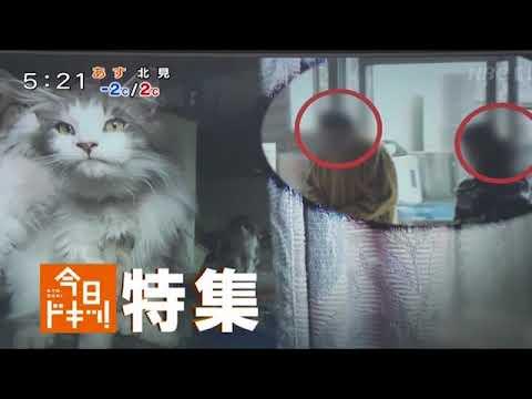 札幌猫虐待事件