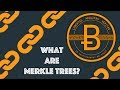 What Are Merkle Trees? [Blockchain & Cryptocurrency (Bitcoin, Ethereum)]