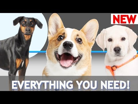 Everything You Need to Train Your Dog!