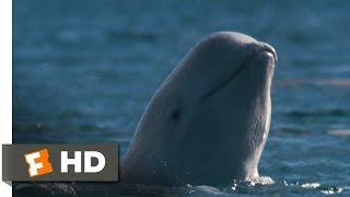 Arctic Tale (3/10) Movie CLIP - Arctic Wildlife (2007) HD