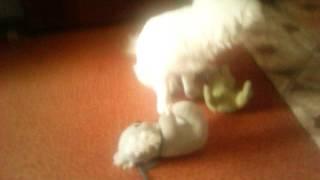 Собака занимается сексом с игрушко