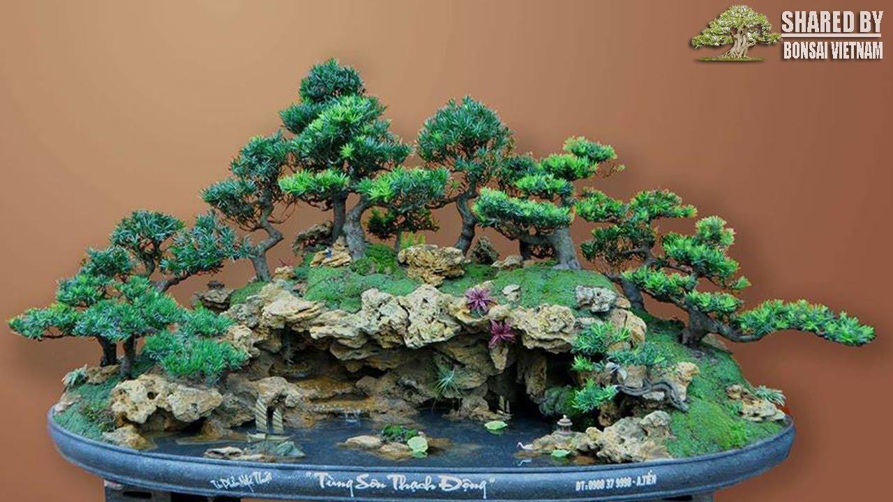 Quá đẹp tác phẩm bonsai tiểu cảnh Tùng Sơn Thạch Động