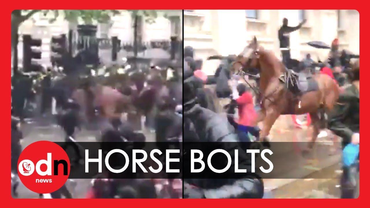 Police Officer Knocked Off Horse in Shocking Incident at London Protest
