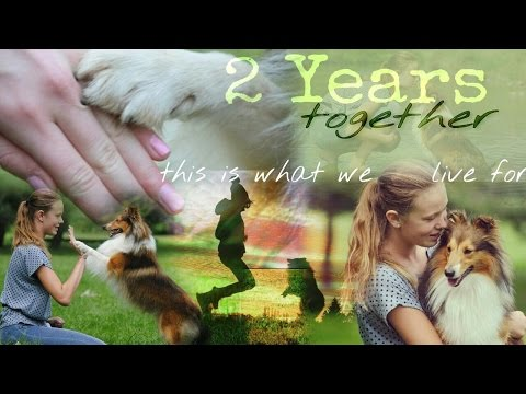 2 years together | This is what we live for [Bonnie the sheltie]